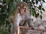 Rebel Monkeys